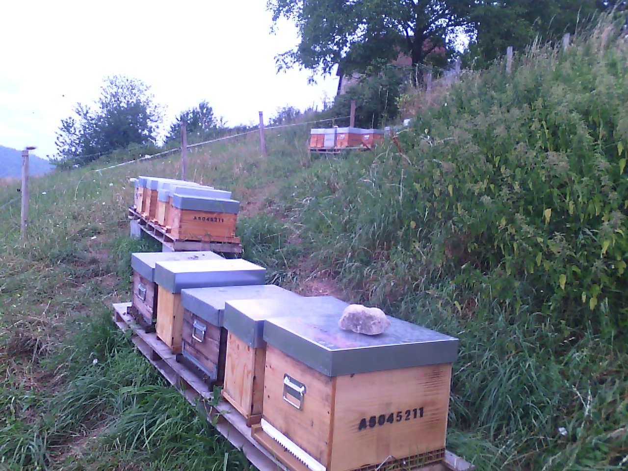 merlas-rucher