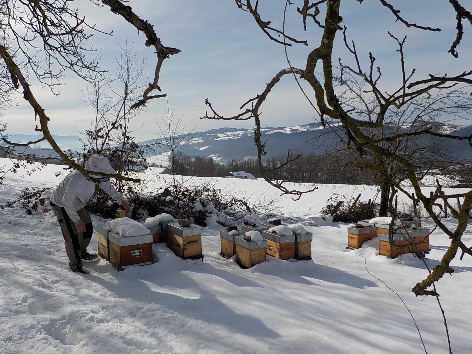 abeille-etoile-la-bauche