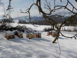 Hivernage en Chartreuse (Savoie)
