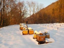 Ruches en hivernage sous la neige en Savoie